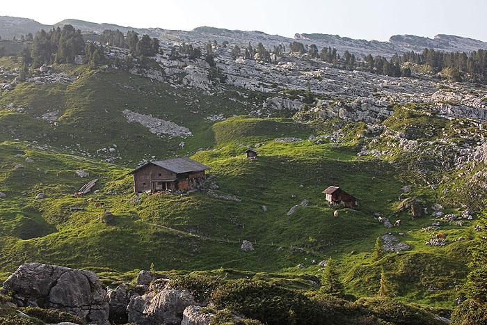 Das vieh auf der alp seefeld oberberg ist soeben eingetroffen und
