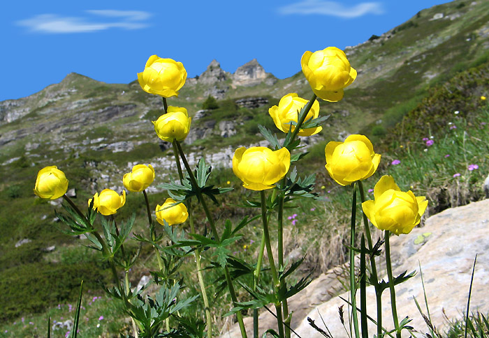 The Spectacular Region Of Beatenberg Berner Oberland